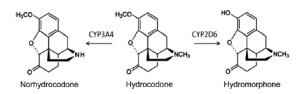 hydrocodone metabolism