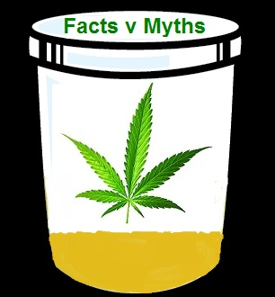 Two Puffs Too Bad: Demystifying Marijuana Urine Testing